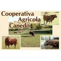 Cooperativa Agricola Canedo
